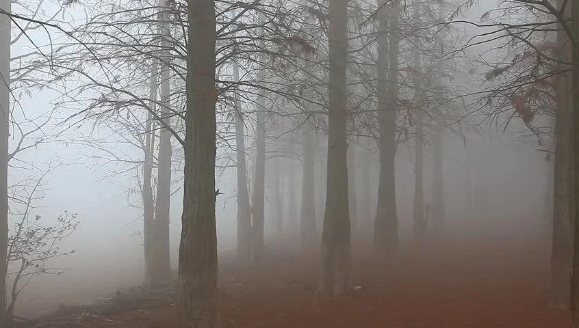3d Moon Night Wallpaper Woods In Fog Stock Footage Video 890095 Shutterstock