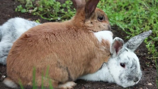 Image result for two bunnies