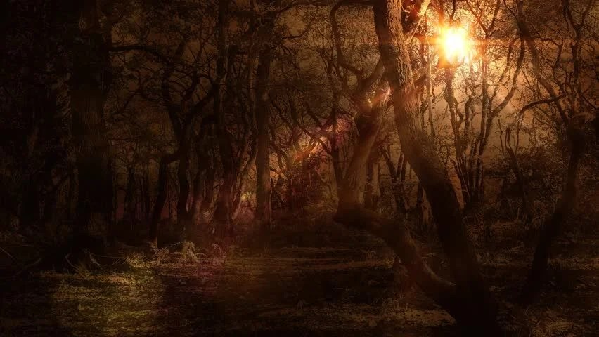 Fall Fairys Wallpapers Ambient Autumn Moonlight Magical Fantasy Forest Background