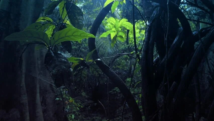 Rain Fall Hd Wallpaper Download Dense Tropical Forest With Twisted Liana Vines Hanging