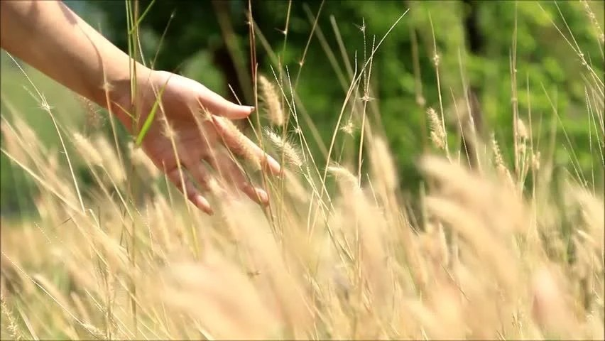 Image result for walking in the  tallgrass