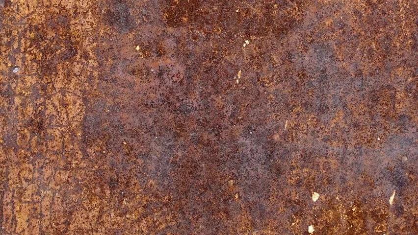 Exotic Animal Wallpaper Close Up Of Indian Gaur S Skin Texture Dark Brown Hide Of