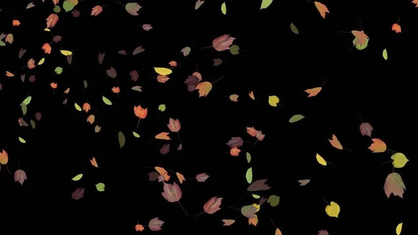 Autumn Tree Leaf Fall Animated Wallpaper Rose Petals Falling Stock Footage Video 203074 Shutterstock