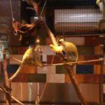 お猿さんがいるレストラン『モンキーのいる レストラン&BAR』は癒やされる上に沖縄気分が味わえます(^o^)
