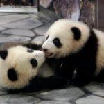 パンダの赤ちゃん誕生の経済効果はなんと◯◯◯億円!?パンダ関連銘柄にも注目してみましょう♫