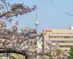 不忍池と桜と東京スカイツリー