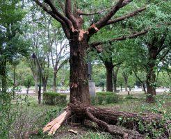 台風一過の上野公園