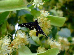 butterfly-1544213_1280
