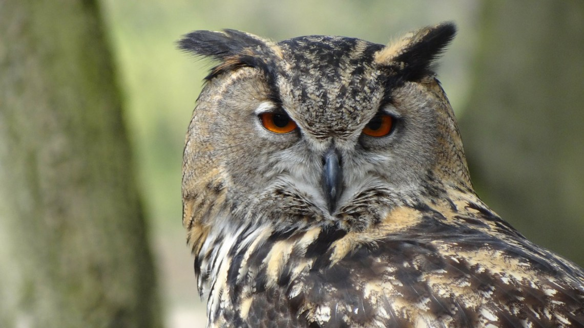 owl-44236_1280