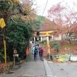 京都一周トレイル西山コース 一周トレイル完全走破!