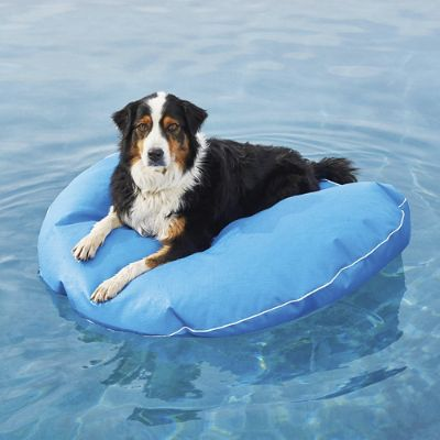 chair pool floats traveling high dog float and lounger frontgate