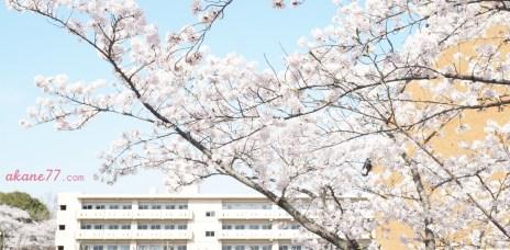 日本留學雜談#4 課堂間的小故事:我要把台灣發揚光大!