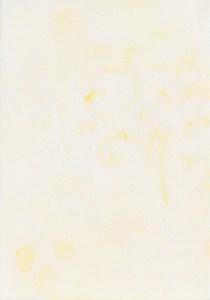 モッコウバラ c -banksia rose C-