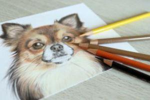 色鉛筆アート、落書き、犬