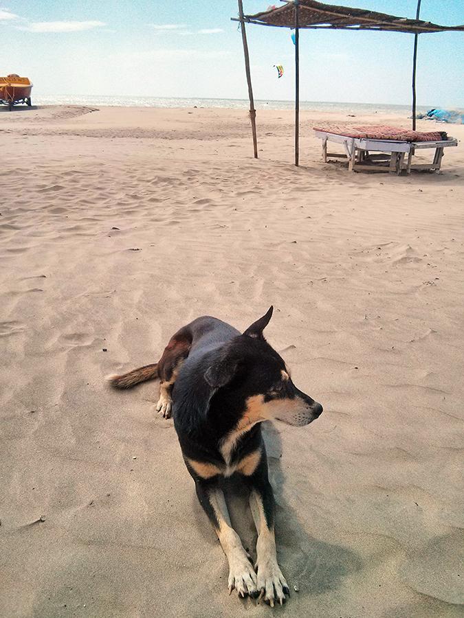 Morjim | Goa | www.akanksharedhu.com | doggie