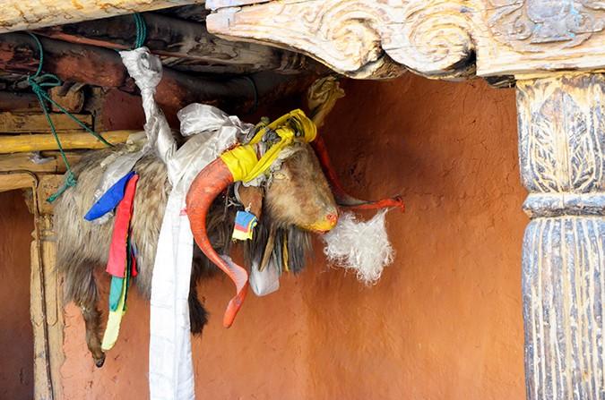 Raid de Himalaya | www.akanksharedhu.com | inside dhankar