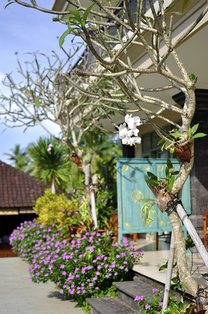 Ubud | Akanksha Redhu | orchid in front  of rooms