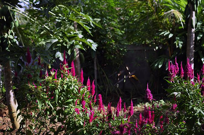 Bali | Akanksha Redhu | pink flowers