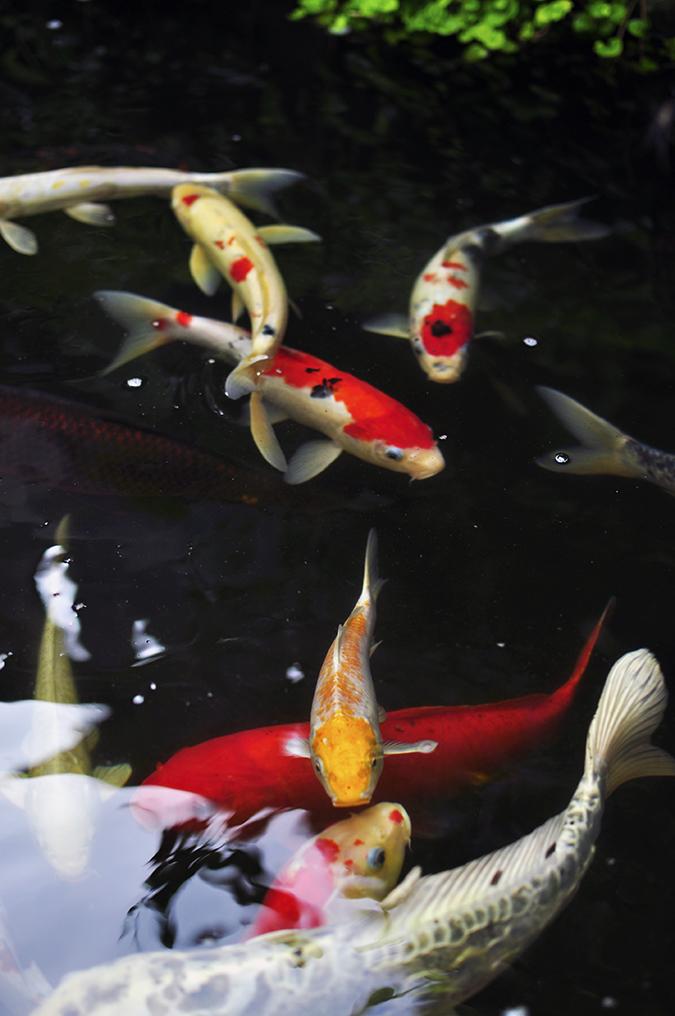 Ubud | Akanksha Redhu | fish