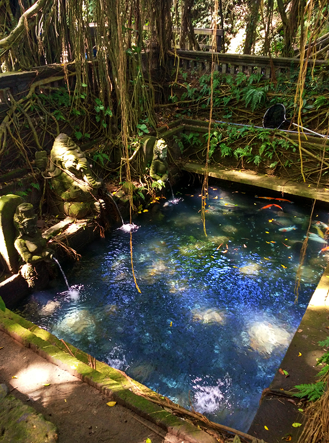 Sacred Monkey Forest Sanctuary - Ubud | Akanksha Redhu | pool phone