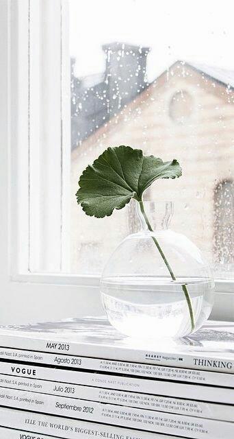 Home Inspo | Akanksha Redhu | leaf in water
