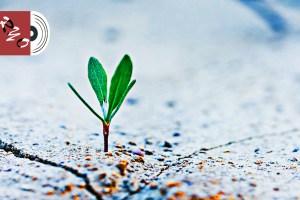 アスファルトから芽をだす木の芽