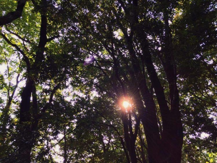 木漏れ日見上げる