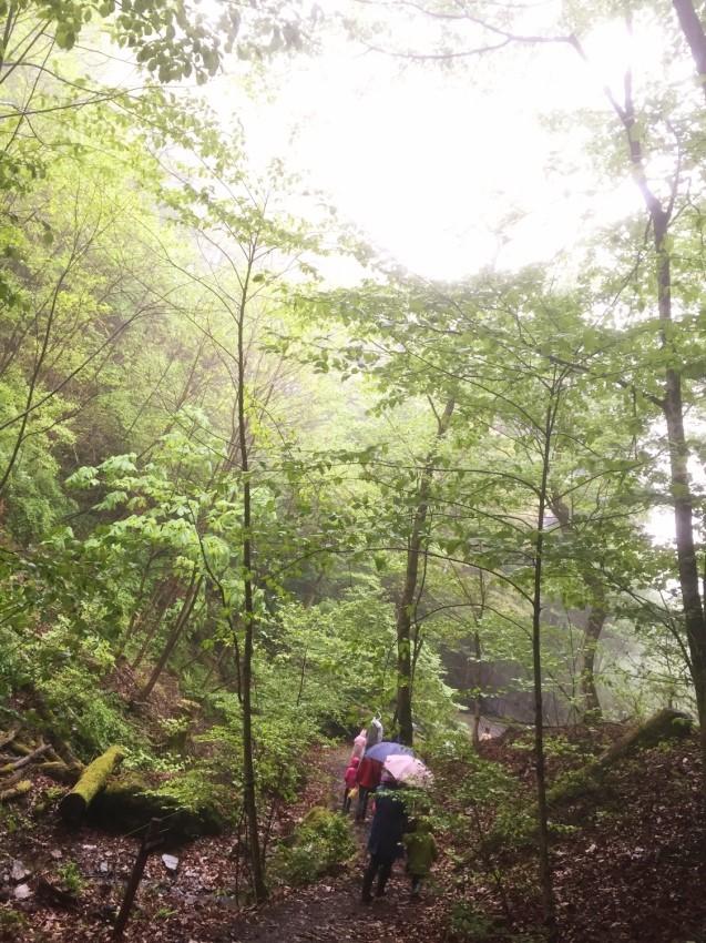 雨の森ウォーク