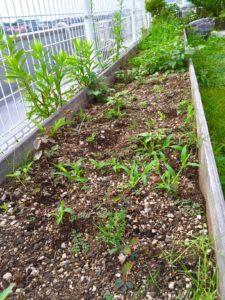 屋上庭園3