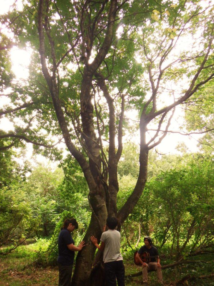 木に触れて歌を聴く。