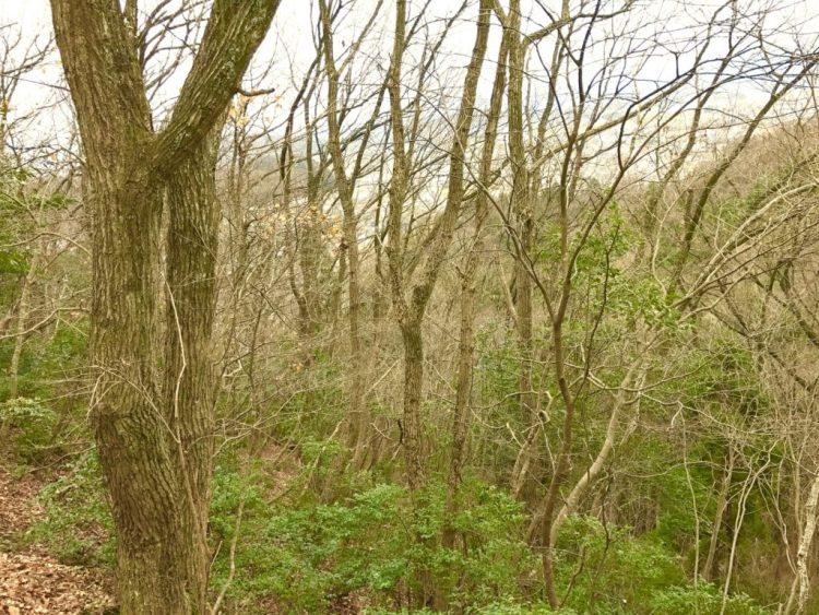 足羽山の森