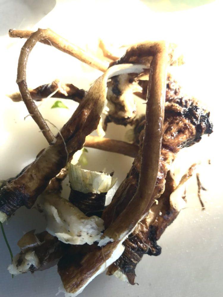 タンポポの根。