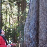 木を見上げる。