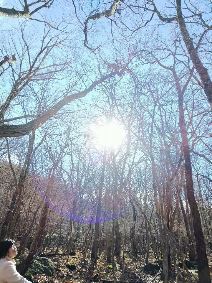 森に座る。