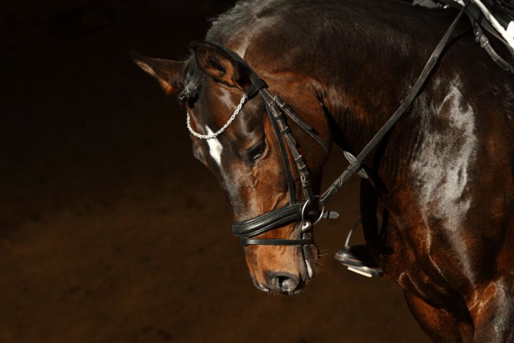 7 Life Lessons from Horses