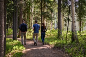 three people walk on a forested path