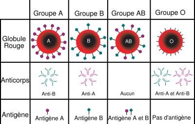Un tableau de groupes sanguins (www.akeza.net)