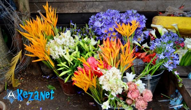 Les producteurs de fleurs avancent vers l'auto développement. (www.akeza.net)
