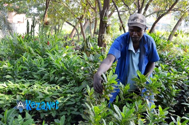Jean Marie Nzobonankira dans la pépinière des fleurs.©Akeza.net