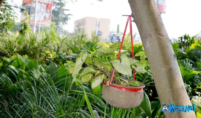 Des fleurs dans le jardin «Eden».©Akeza.net