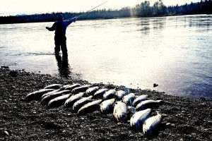 Kenai Trout and Dolly (4 of 5)