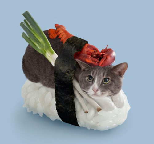 when-cats-and-sushi-combined-04