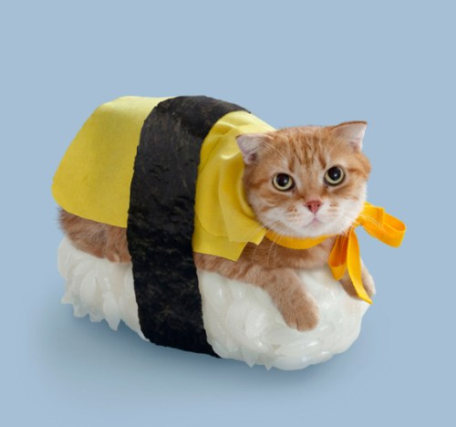 when-cats-and-sushi-combined-12
