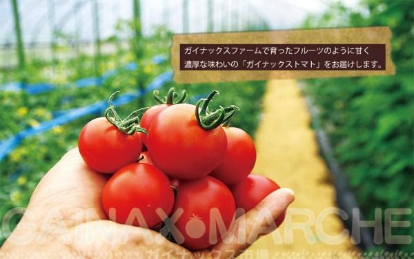 gainax-opens-tomatoes-store-gainax-marche-01