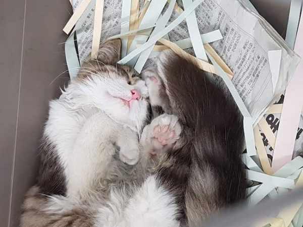 super cute cat akihikogoto.com