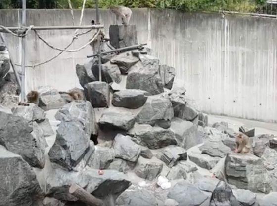 5SEC 298 (Iida Zoo,飯田動物園,Nagano, Japan, August 2018)