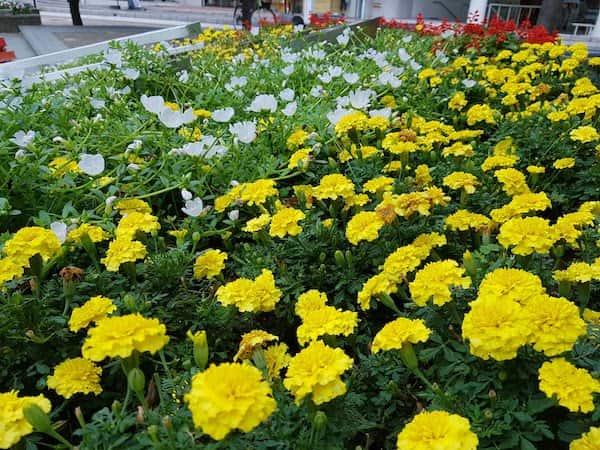 松本市駅前通り (Matsumoto Walking, Matsumoto trip part5), akihikogoto.com