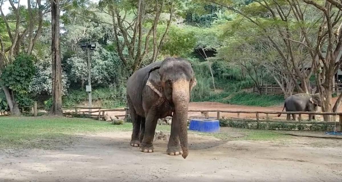 5SEC 367 - Maesa Elephant Camp, Chiang Mai, Thailand, December 2018