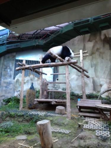 ChiangMaiZoo2011-156
