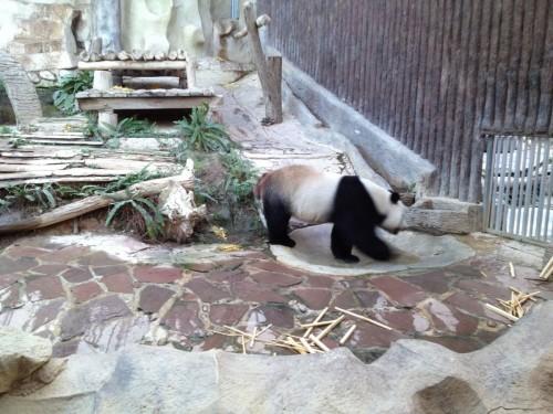 ChiangMaiZoo2011-168